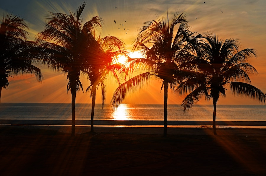 sunset on the ocean behind palm trees