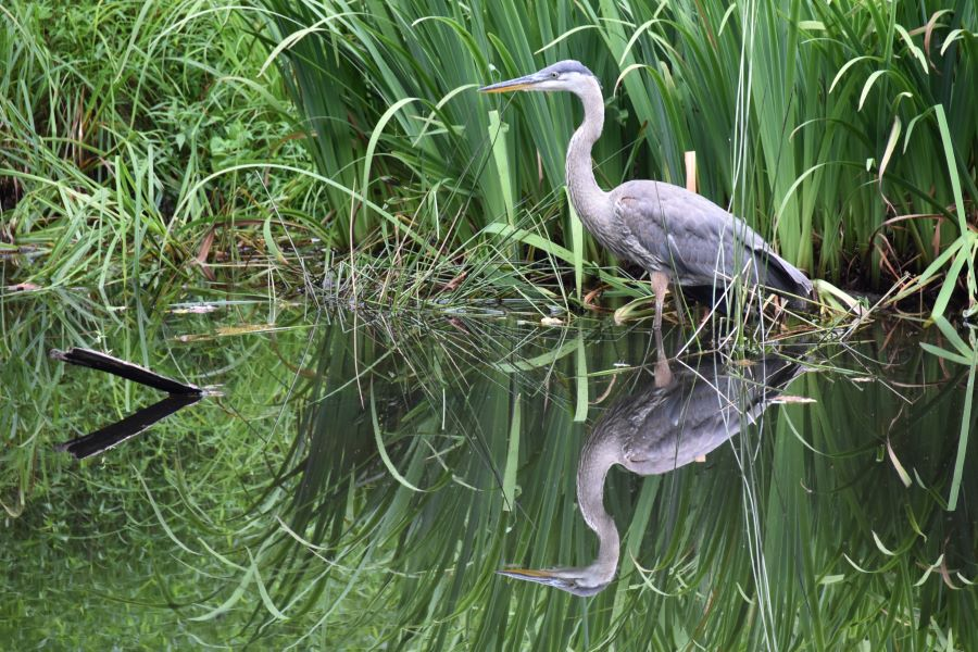 nature parks and preserves in venice florida